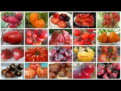 Вопрос: Какие экзотические сорта томатов вы выращивали с положительным опытом?