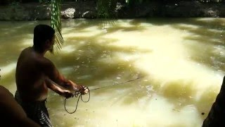 Fish Catching in a Pond with Fish Net (Jal Mara) Khulna, Bangladesh