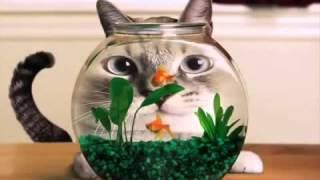 Прикольные котики, смешные коты