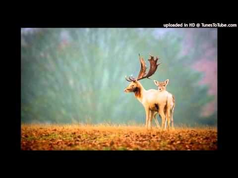 Dikanda - Ederlezi (Nicola Noir Remix)