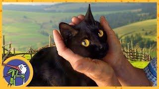 Кошка Китти едет к бабушке ловить мышей