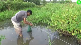 Thả câu tứ bằng mồi nhái ở khu đất hoang l Fishing