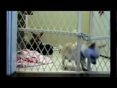 Puppy Escape Fail [FUNNY]