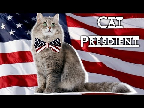 Cat President | SAVE ME | Cat President ~A More Purrfect Union~ Gameplay | Part 1