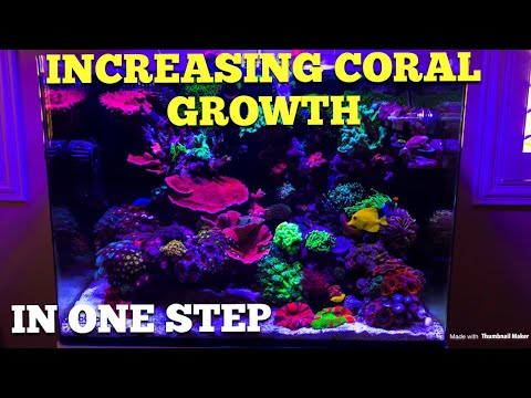 Increasing Coral Growth One Easy Step