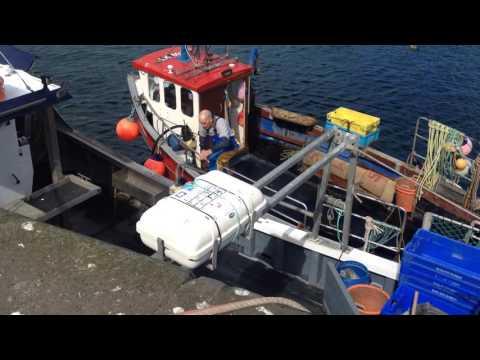 Friendly seals in Dunbar Harbour