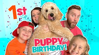 Theo is turning 1! Puppy's Birthday VLOG / KCity Family