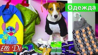 ОДЕЖДА И ОБУВЬ ДЛЯ СОБАК ОТ TRIOL | ПОКУПКИ ИЗ ЗООМАГАЗИНА | Elli Di Собаки(Джина теперь модница, новая одежда и ботинки для собак! Все мои покупки из зоомагазина тут: https://goo.gl/078wSV ▽Я..., 2016-09-10T16:35:34.000Z)