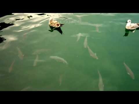 Big Fish under Sea Gulls in Barcelona