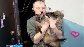 Магаданские пожарные вернули к жизни двух угоревших котов