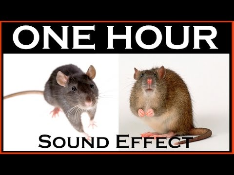 Sound Effects Of Mouse | ONE HOUR | HQ