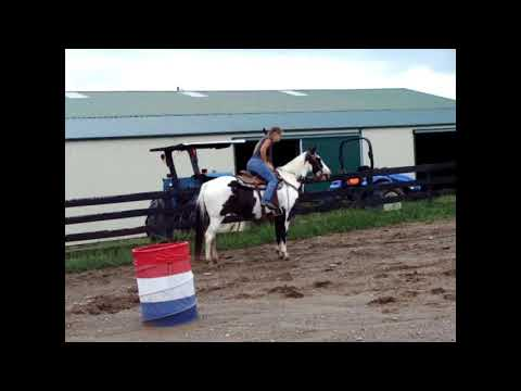 BLACK & WHITE OVERO PAINT MARE, Been Ridden By Youth And Beginners At Summer Camp, Gentle & Flashy