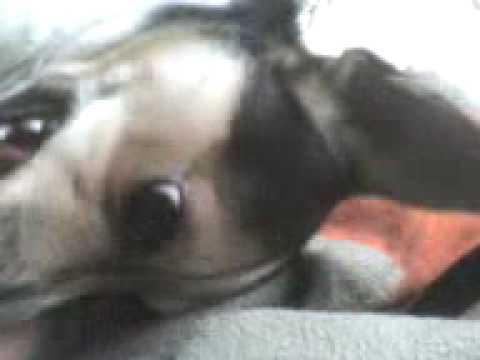 videos xxx con perros