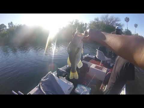 NATIVES BASS FISHING SAFFORD,AZ