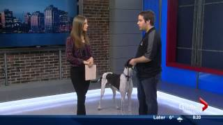 Dog Talk - Global Morning News Halifax March 26 With Tristan Flynn