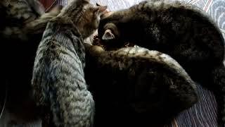 Котята кушают сухой корм