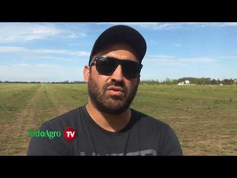 Picado de alfalfa en el campo experimental de la UNVM