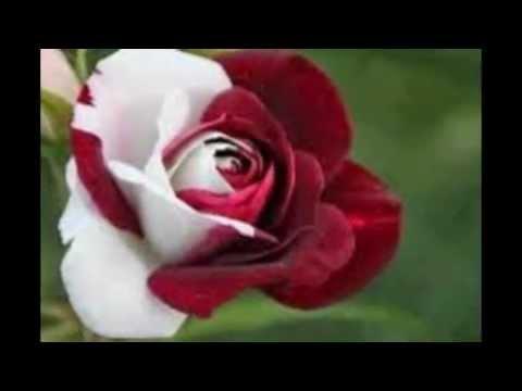 unique flowers, Beautiful flower