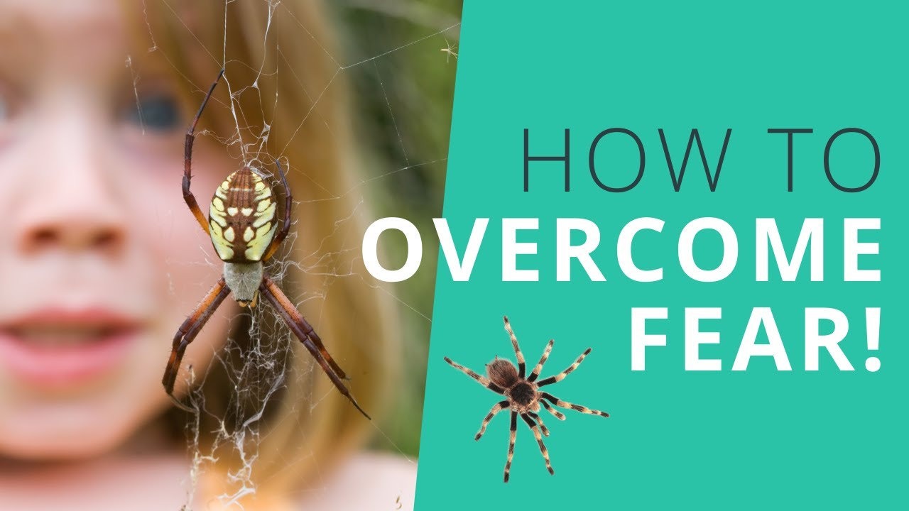 How to Overcome Fear of Spiders and Mice Using This One Simple Tool