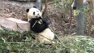 yingying816: Fu Long and Zhen Zhen