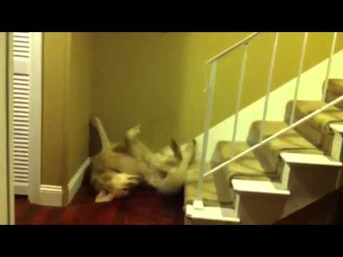 Fez falls down the stairs