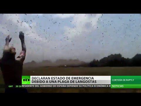 Estado de emergencia en el sur de Rusia por una plaga de langostas (saltamontes)