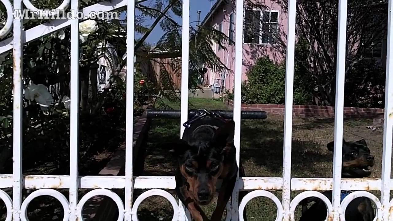"""how to keep your dog in the yard """"ghetto style"""" - youtube"""