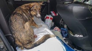 Собака пришла к людям за помощью после того как ее бросил хозяин