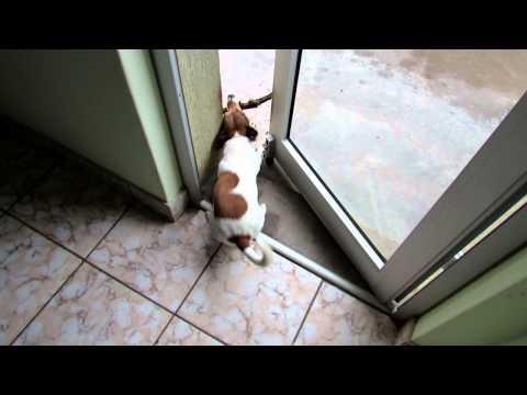 Dog gets stick stuck in door