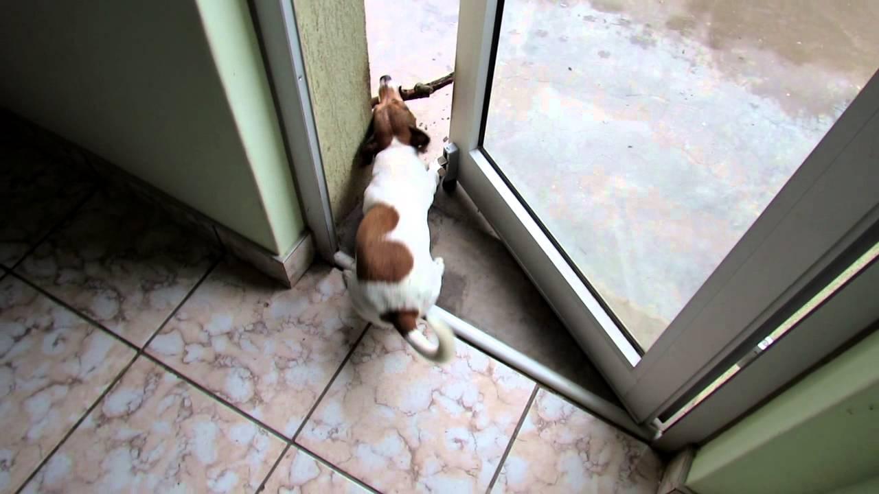 Dog Gets Stick Stuck In Door Youtube