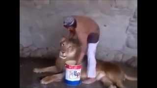 Самое смешное видео Как помыть ЛЬВА ШОК Реально моет