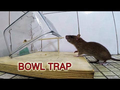 mouse trap boat instructions
