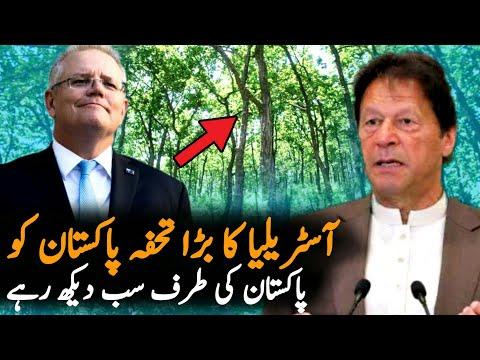 Australia Gift A Forest To Pakistan | Miyawaki | Politics | Pakistan Australia Relations
