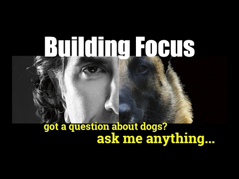 Building FOCUS With Your DOG - ask me anything - dog training video
