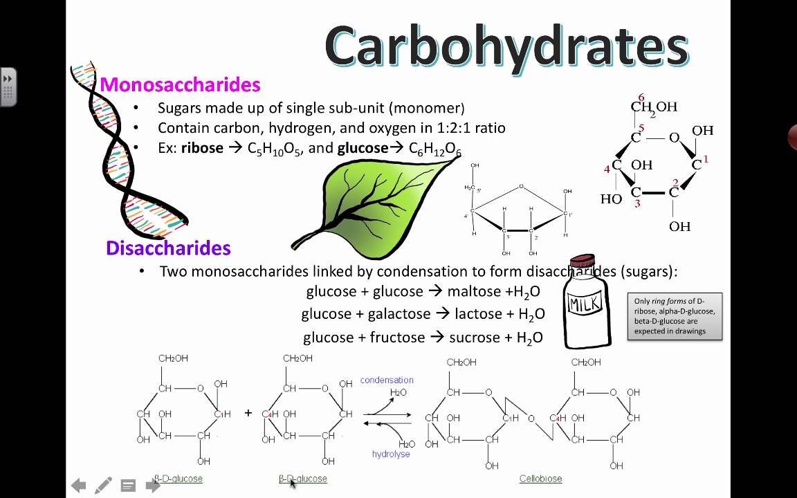 Carbohydrate Structure (2016) IB Biology - YouTube