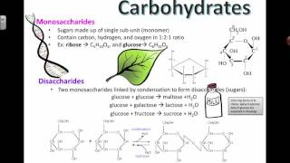 Carbohydrate Structure (2016) IB Biology
