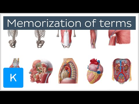 Four steps to memorization of anatomy terms - Human Anatomy | Kenhub