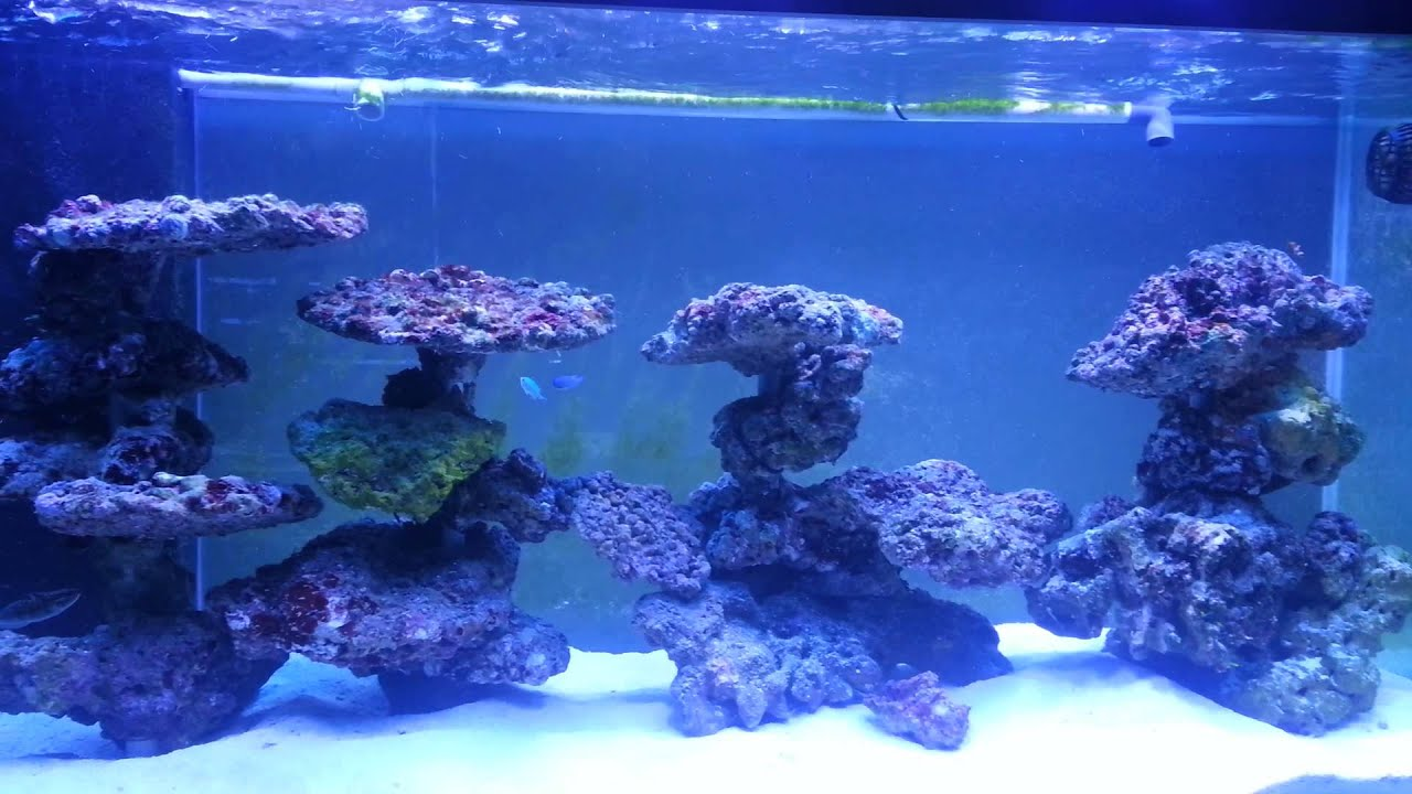 reef tank aquascaping on pvc - youtube