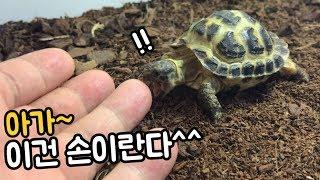 거북이에게 직접 키운 먹이를 주면 주인 손 타는 거북 …