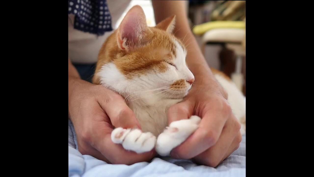 【Love cat】That's so cute