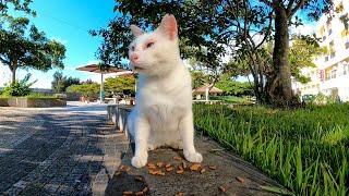 公園でカリカリを貰って食べる野良猫