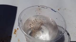ядовитая медуза