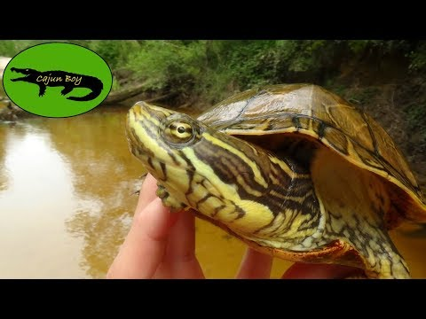 How To Catch Turtles!