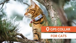 Cat GPS tracker | Weenect Cats 2 (EN)