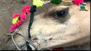 Madani Muzakra - Eid 3rd Day (Camel Qurbani) - Maulana Ilyas Qadri