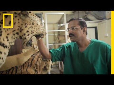 This Self-Taught Taxidermist May Be the Last One in India | National Geographic