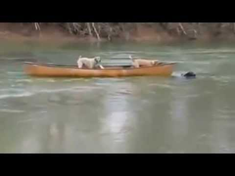 A Smart Dog saves the stranded  Dogs