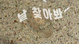 성별까지 바꾸는 바다의 카멜레온 [핫클립] / YTN …