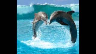 Delfinai Tavo Kambary