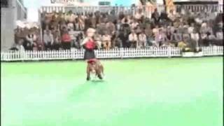 Canine Freestyle Team - Video 2